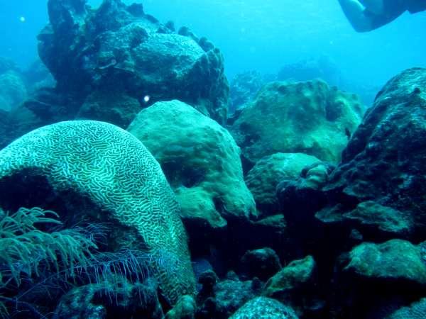 Scuba Diving off the coast of Aruba