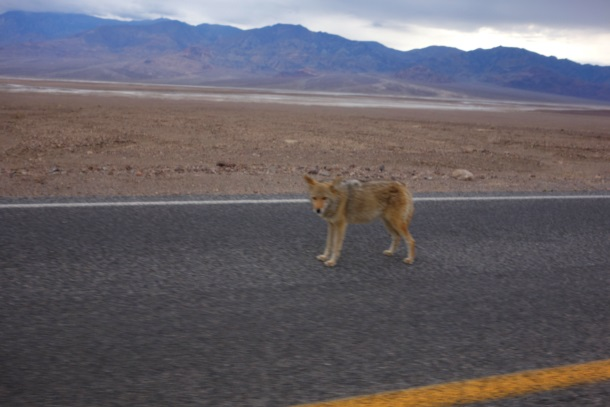 Death Valley National Park_2518a