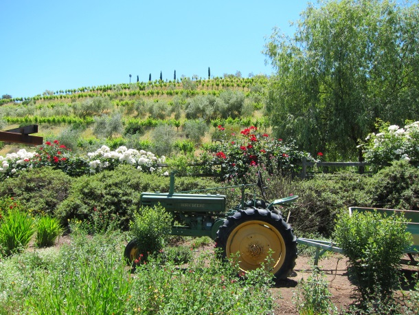 BENZIGER Family Winery in Sonoma-3248