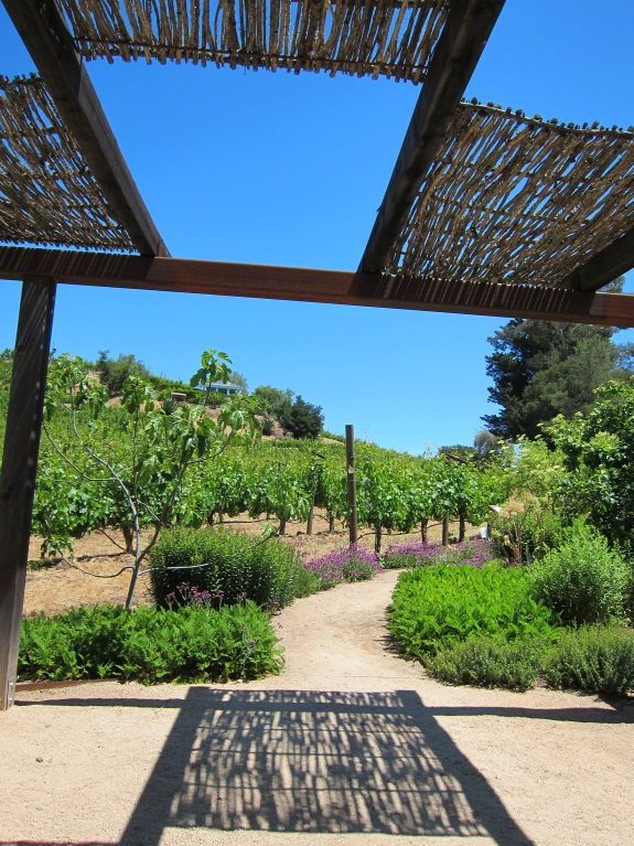 BENZIGER Family Winery in Sonoma-3257