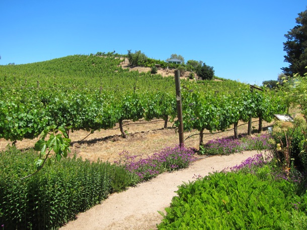 BENZIGER Family Winery in Sonoma-3257b