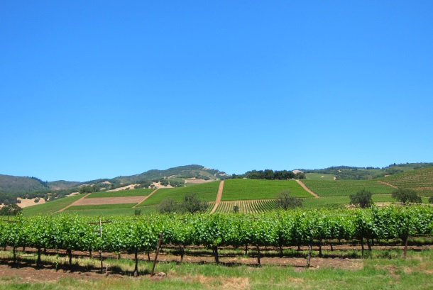 BENZIGER Family Winery in Sonoma-3260