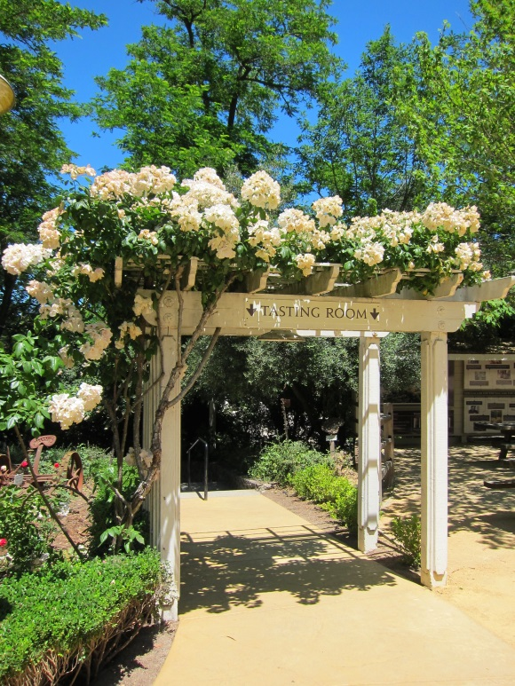 BENZIGER Family winery in sonoma california_3229