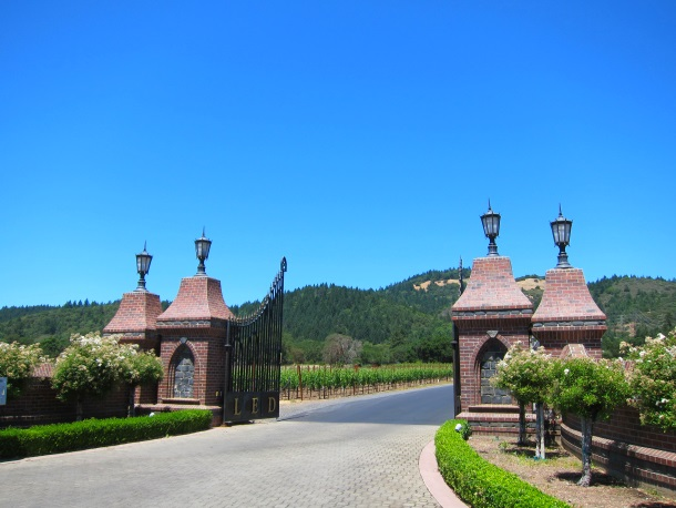 Ledson Winery Vineyards in Sonoma California_3262