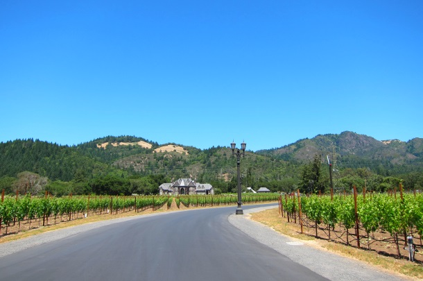 Ledson Winery Vineyards in Sonoma California_3263