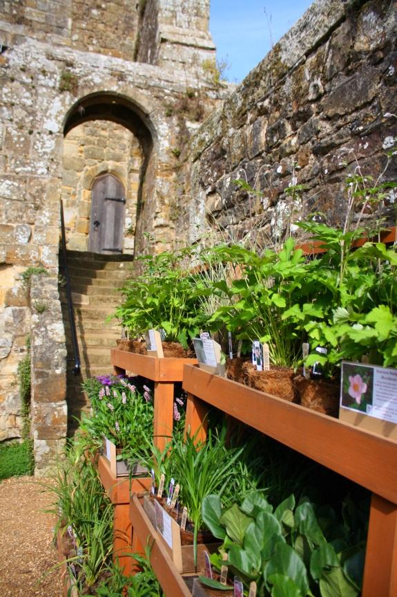 Hastings Castle_7631