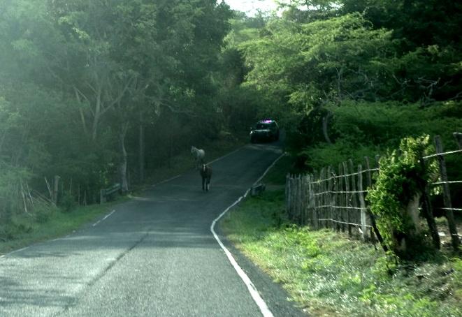 Day Trip Puerto Rico Arecibo Observatory - DSC04270a