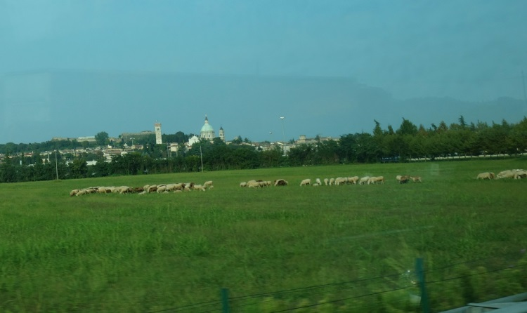 Slovenia to Saint Vincent, Italy-750-DSC00796sheep
