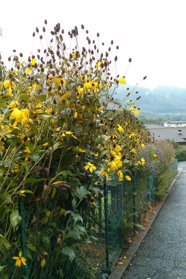 Walk in Mendrisio_20141008_125556
