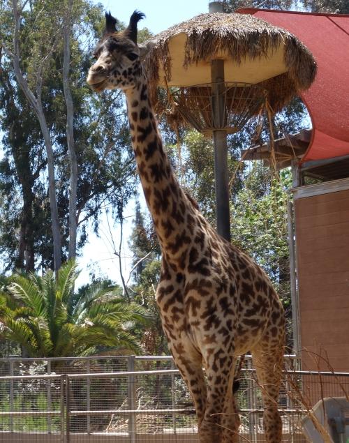 San Diego Birthday Trip 2015-DSC04947