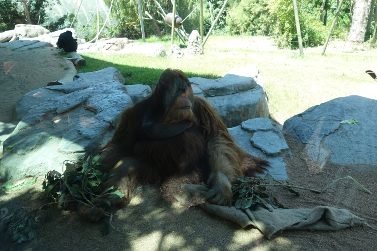 San Diego Zoo April 2015-750-DSC04978