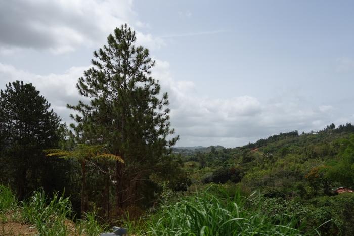 Lechoneras in Guavate, Puerto Rico-DSC08460