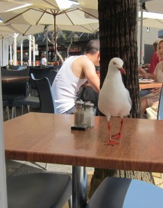 Pigeon begs for food at an outdoor table