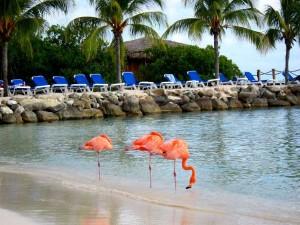 Flamingos on Renaissance Island in Aruba