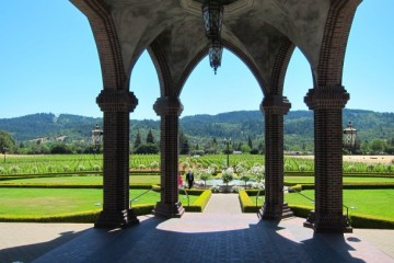 Ledson Winery Vineyards in Sonoma California_3272