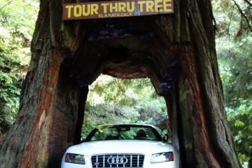 Redwoods 2013-DSC02554