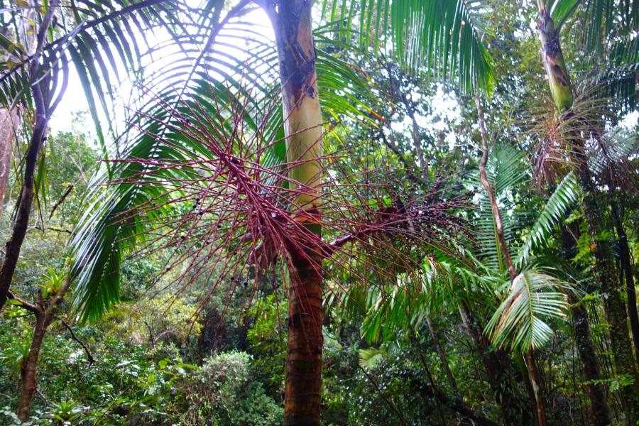 Fauna in El Yunque-DSC09197