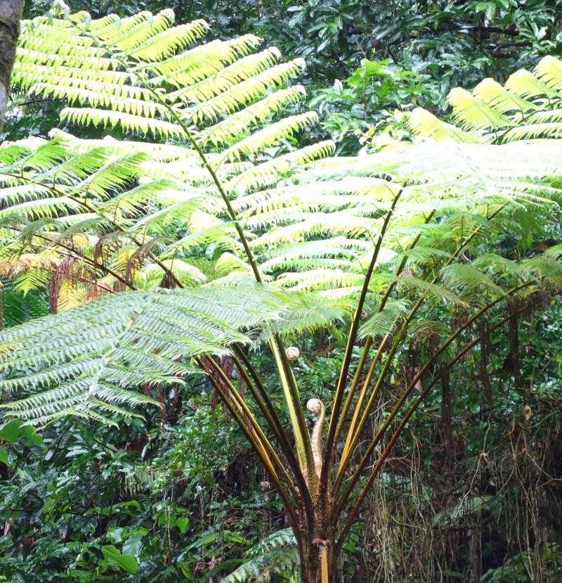 Fauna in El Yunque-DSC09212