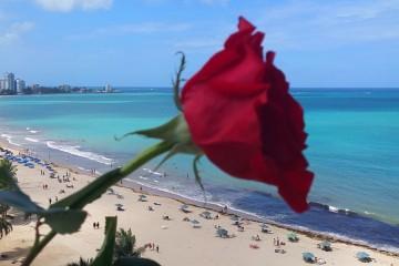 Valentine's Day in Condado, Puerto Rico-feat_121902