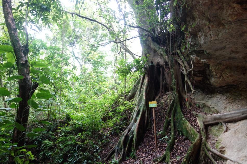 Cueva Ventana Puerto Rico-DSC01392