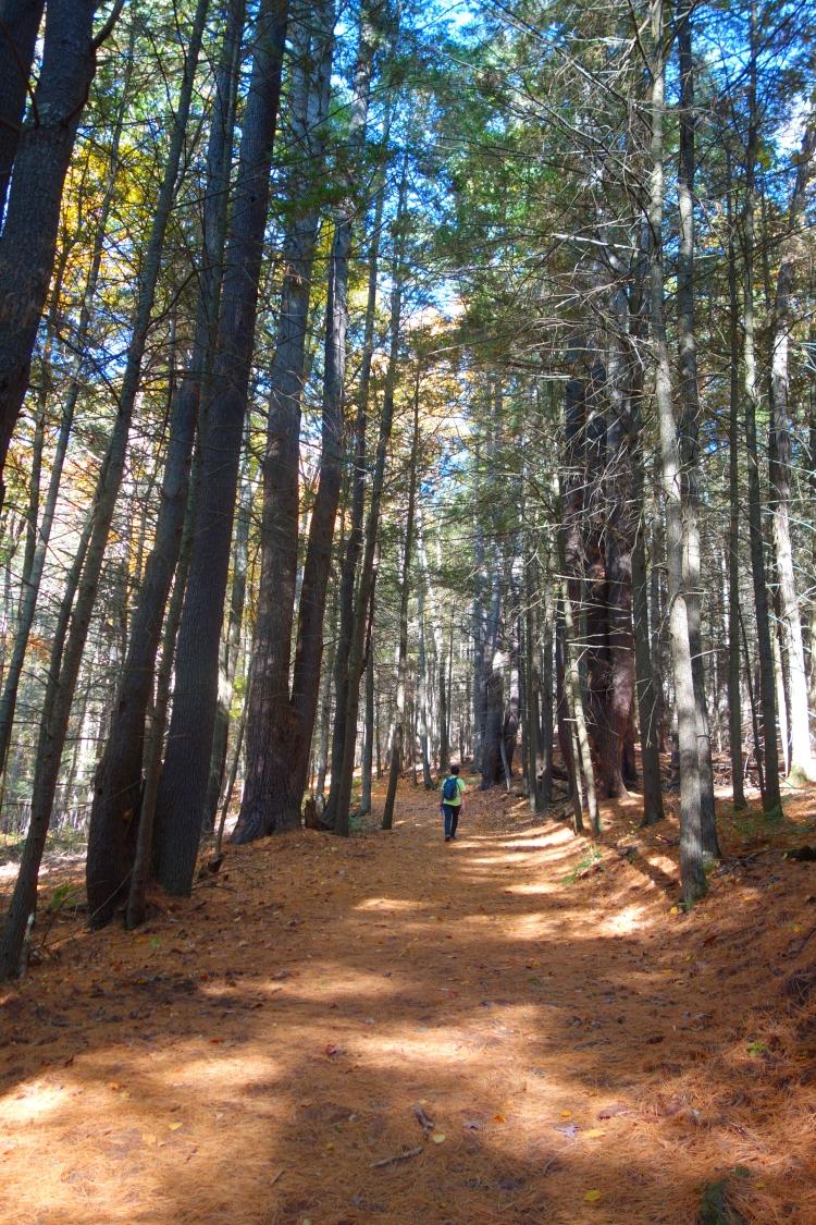 Steep Rock Hike Connecticut-DSC08407
