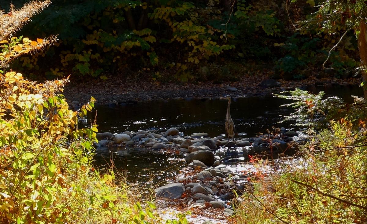 Steep Rock Hike Connecticut-DSC08410