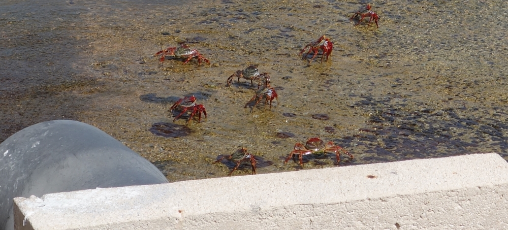 fort-rif-crabs-3dsc04615