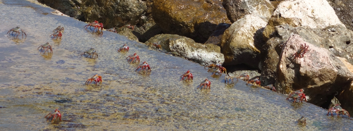 rif-fort-crabs-2dsc04614