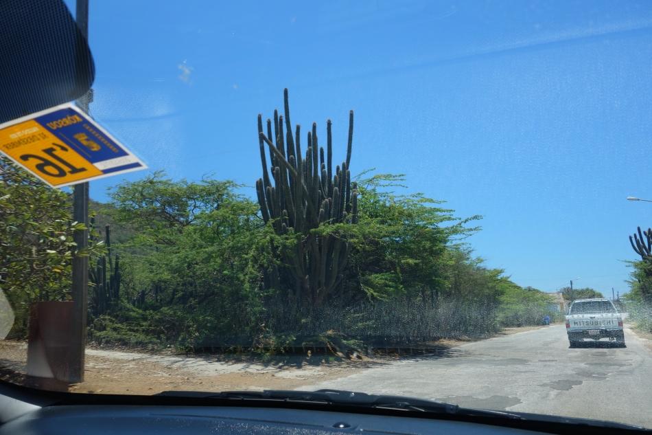 Curacao-August 2016-DSC04106
