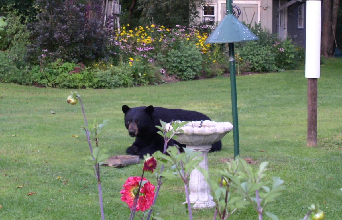 reflecting on summer social vixen