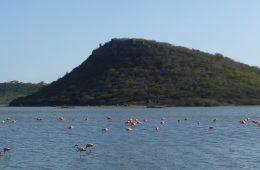flamingosdsc04642