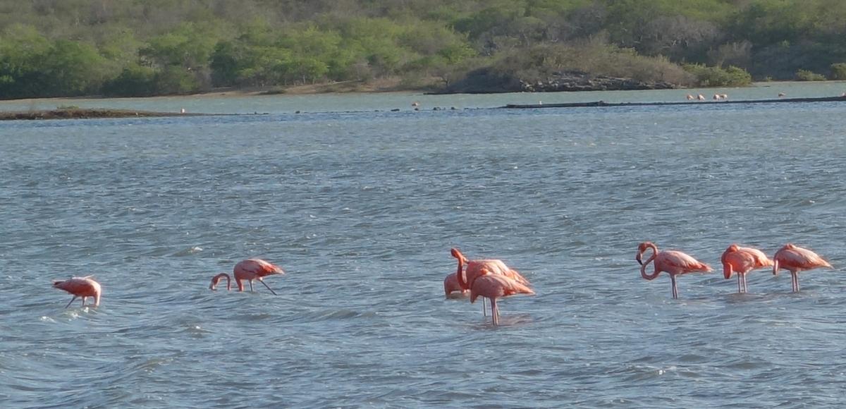 flamingosdsc04734