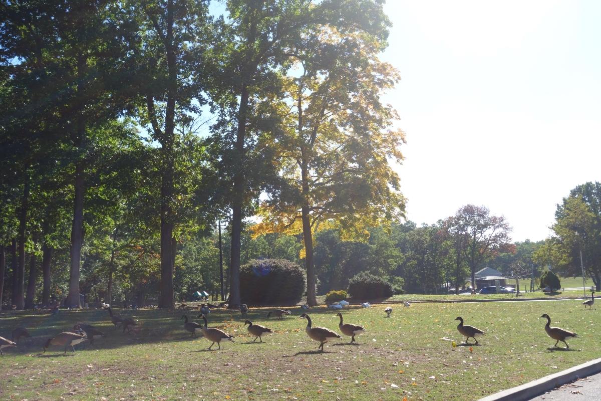 hubbard-park-in-meriden-dsc07225