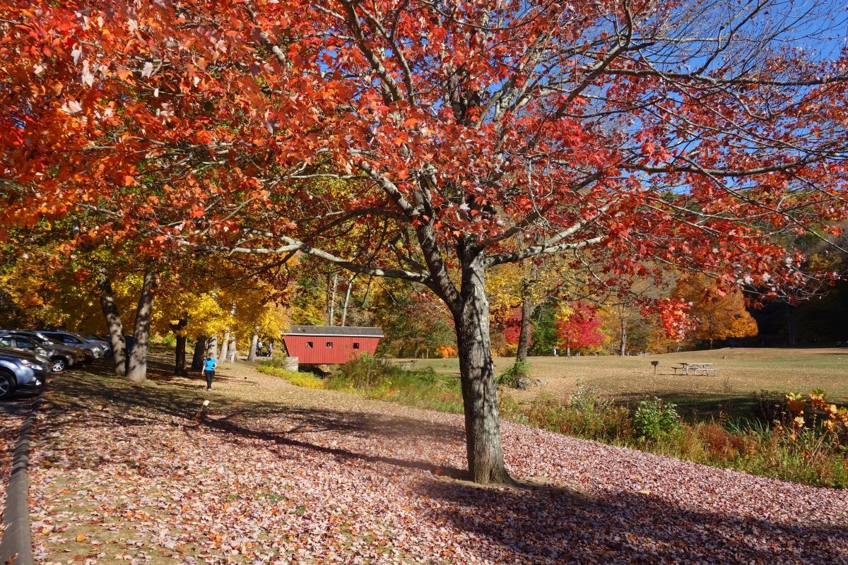 kent-falls-state-park-autumn-fall-2016-dsc09123