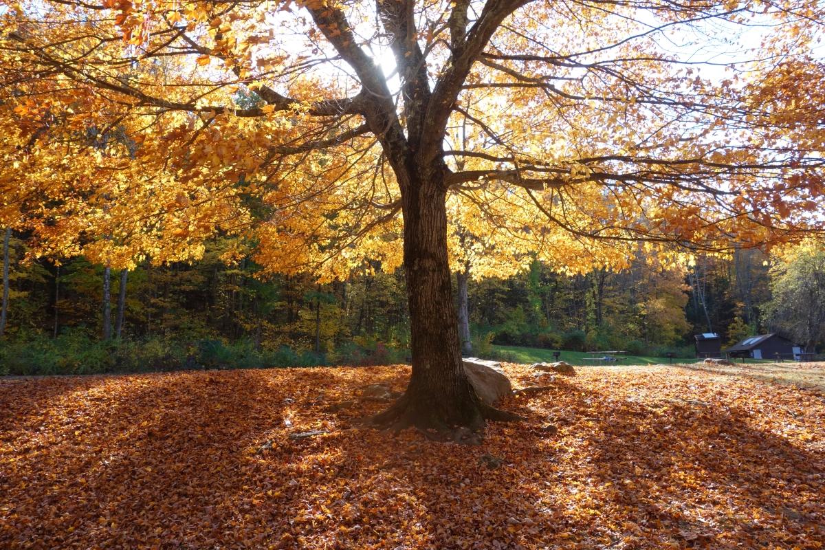 kent-falls-state-park-autumn-fall-2016-dsc09142