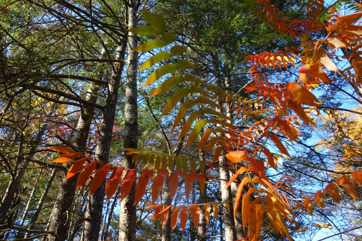 kent-falls-state-park-autumn-fall-2016-dsc09235
