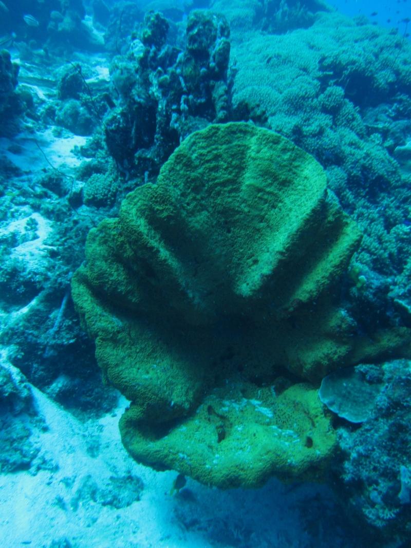 scuba-diving-curacao-4790