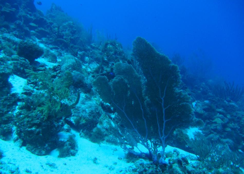 scuba-diving-curacao-4804