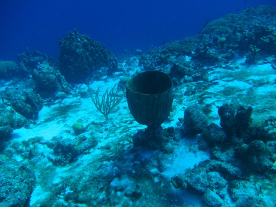 scuba-diving-curacao-4822