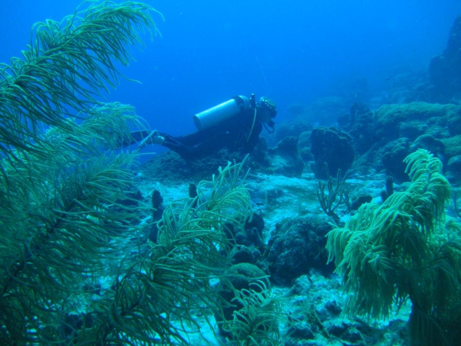 scuba-diving-curacao-4827
