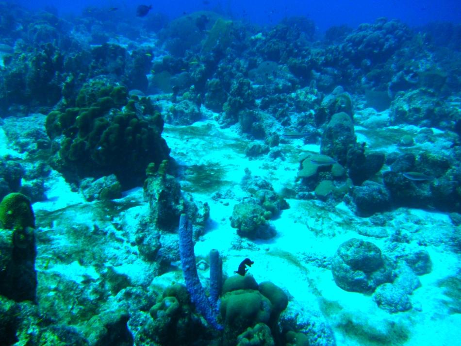 scuba-diving-curacao-4830