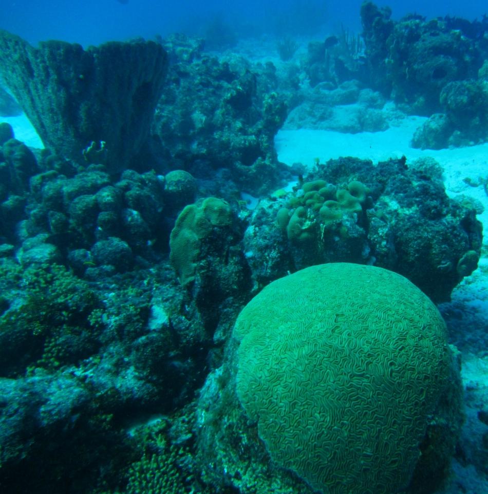 scuba-diving-curacao-4835