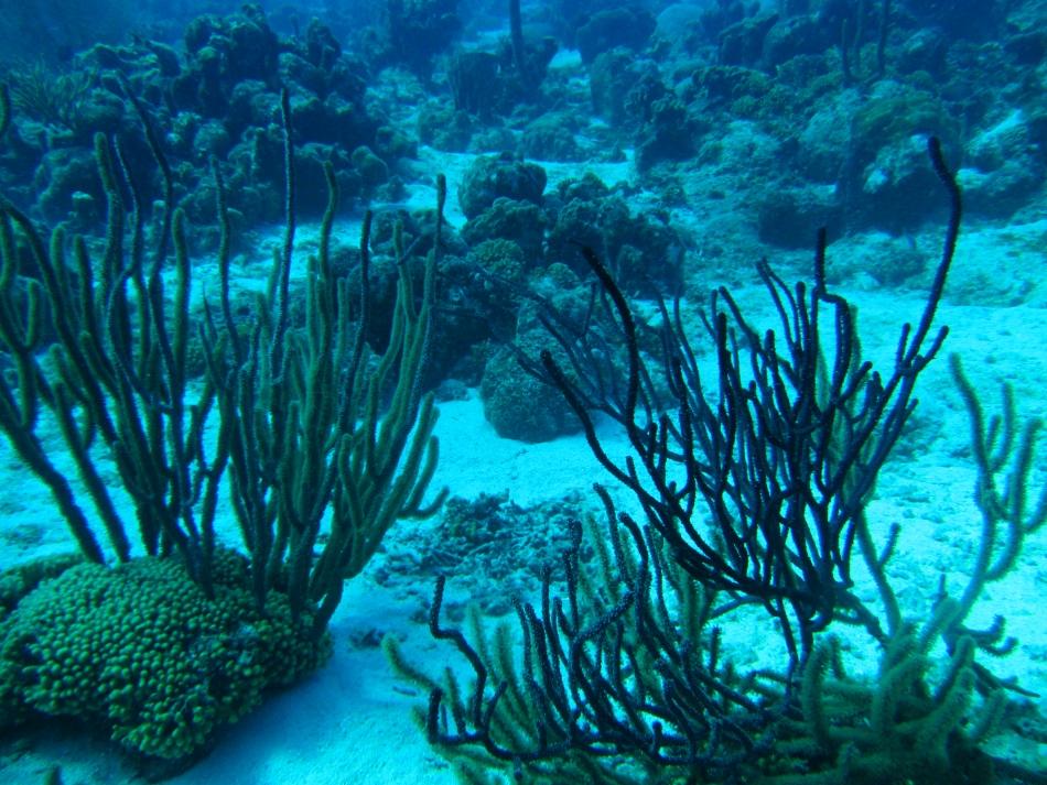 scuba-diving-curacao-4863