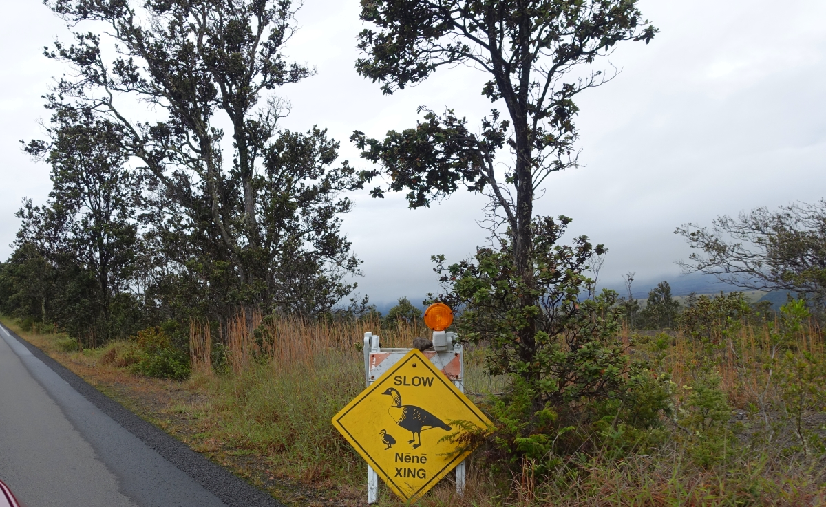 Volcano National Park-DSC05051