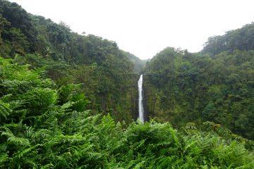 Akaka Falls, Hilo-DSC05218 (2)