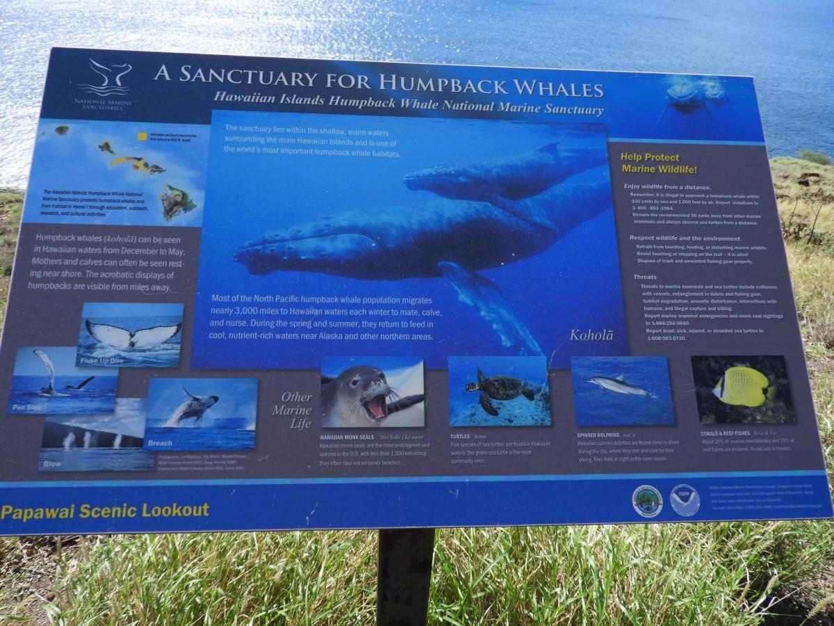 Humpback whale tour maui hawaii december 2016-DSCN0548
