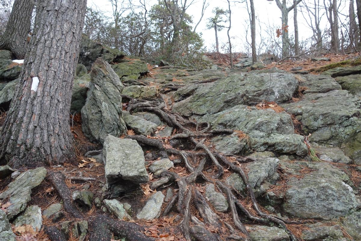Lions Head Trail to Iron Bridge Hike-DSC04641