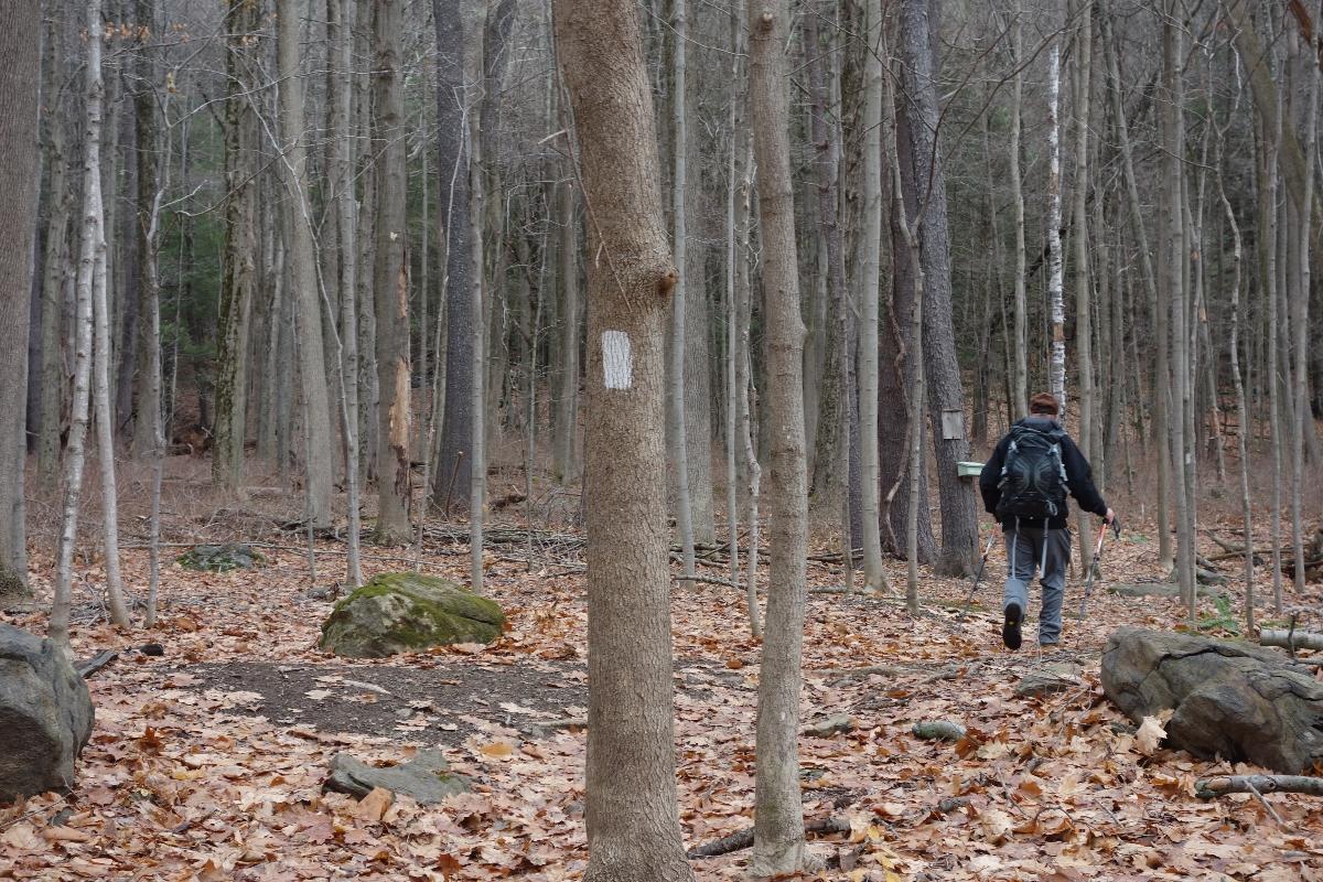 Lions Head Trail to Iron Bridge Hike-DSC04760