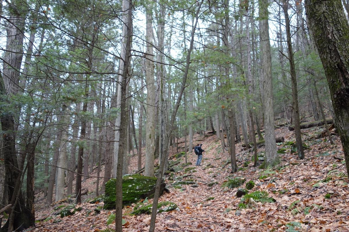 Lions Head Trail to Iron Bridge Hike-DSC04766