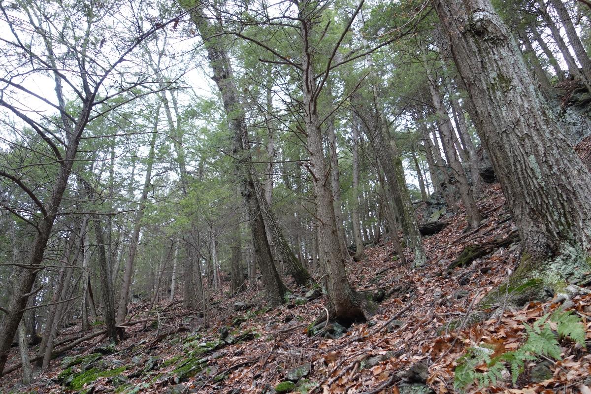 Lions Head Trail to Iron Bridge Hike-DSC04796